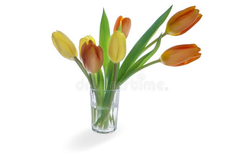 Gula tulpan blommar med sidor i exponeringsglaset som isoleras på vit bakgrund med skugga arkivbild