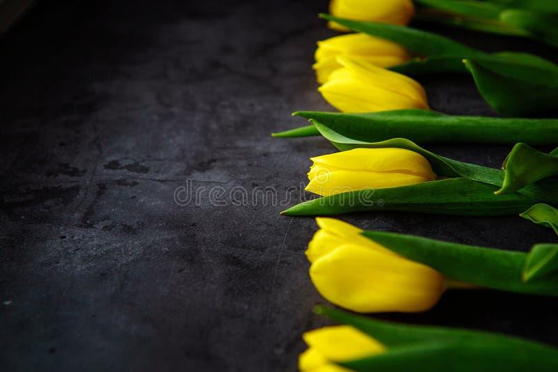 Gula tulpanblommor på mörk bakgrund Väntande på vår Lyckligt påskkort, kvinnors dag, moders dag, mars 8 Plan positi royaltyfria bilder