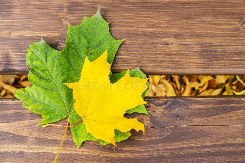 Gula två och grön lönnlöv på en träbänk Hösten lämnar royaltyfri foto