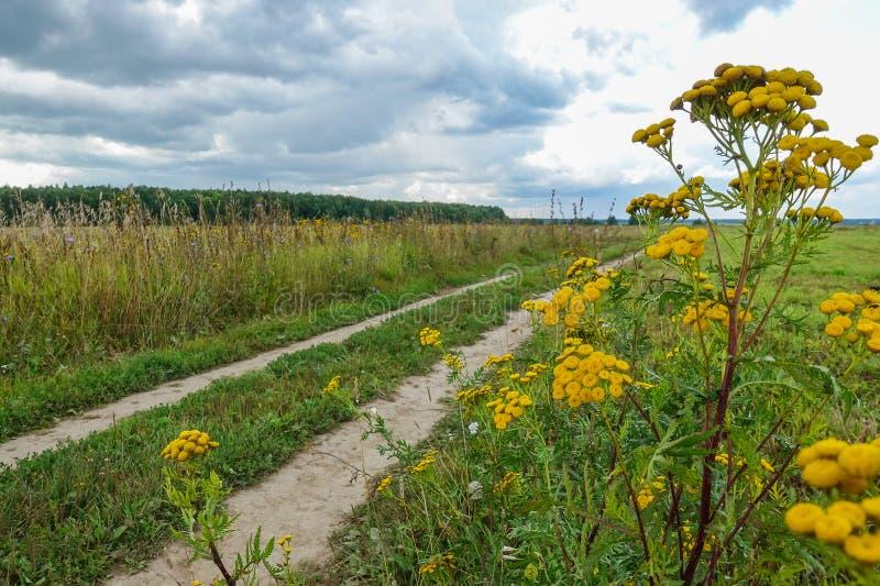 Gula vildblommor på en bakgrund av en closeup för landsväg royaltyfria bilder