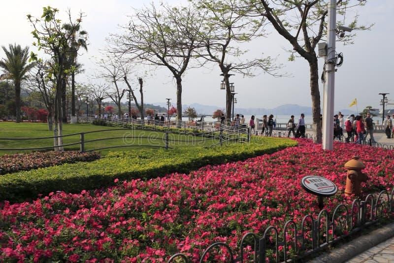 Gulangyu islet roadside park royalty free stock image