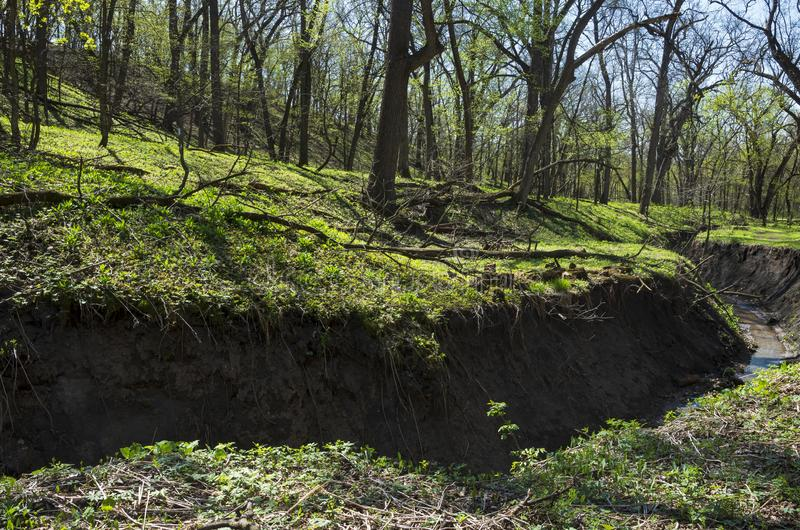 Gulch Along Hillside of Flandrau State Park. Gulch along woodland hillside of flandrau state park during spring royalty free stock images