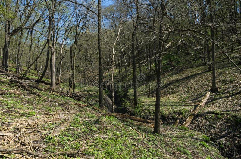 Gulch Through Forest of Flandrau State Park. Gulch winding through forest of flandrau state park in spring stock image
