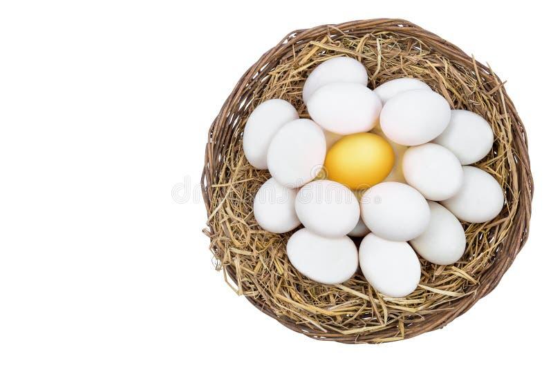 Guld- ägg som står ut från vita ägg på vide- korg fotografering för bildbyråer