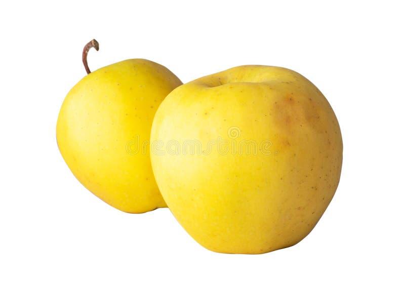 Guld- äpplen, gula äpplen, ljusa äpplen arkivfoton