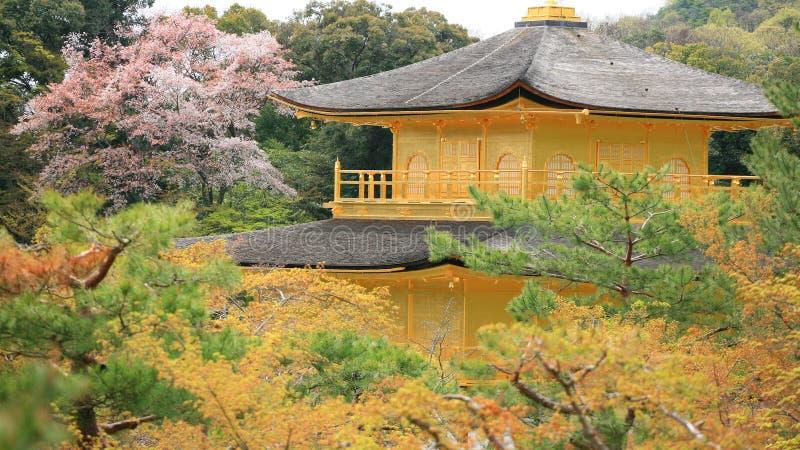 guld- överkant för kinkakujipaviljongtempel royaltyfri foto