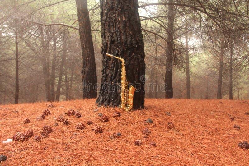 Guld- Alto Saxophone i skogen på foten av Mount Etna Ön av Sicilien, Italien placera text Kort romantiker royaltyfria foton