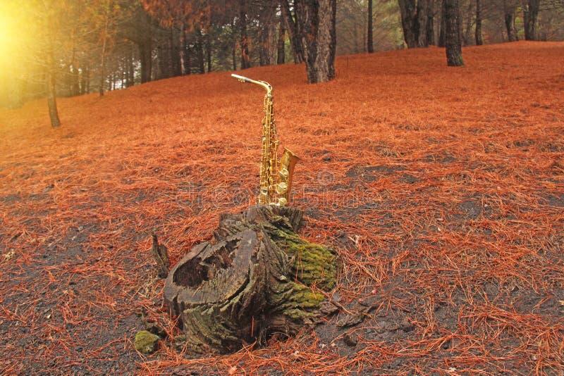 Guld- Alto Saxophone i skogen på foten av Mount Etna T fotografering för bildbyråer