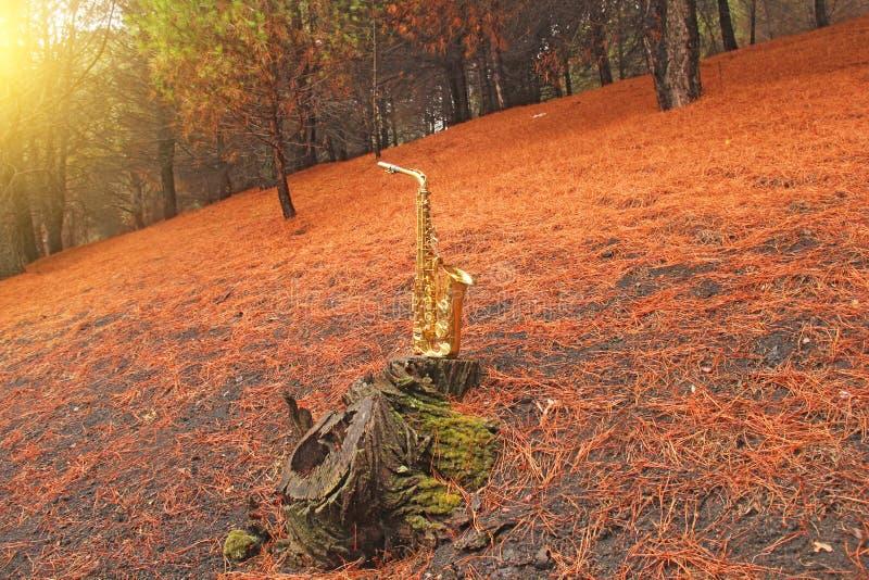 Guld- Alto Saxophone i skogen på foten av Mount Etna T royaltyfri bild