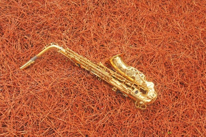 Guld- Alto Saxophone i skogen på foten av Mount Etna T arkivfoto