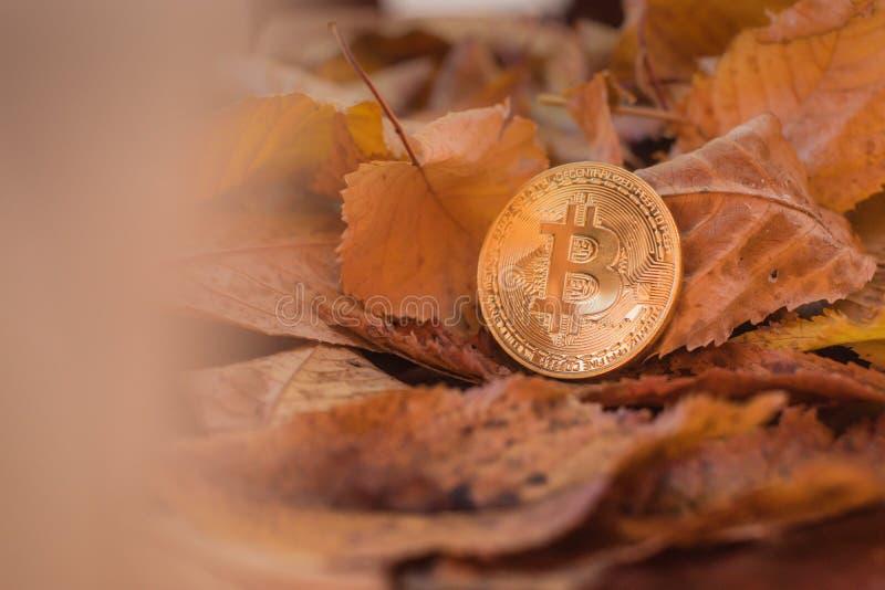 Guld- bitcoin med höstleafes i bakgrund arkivbild