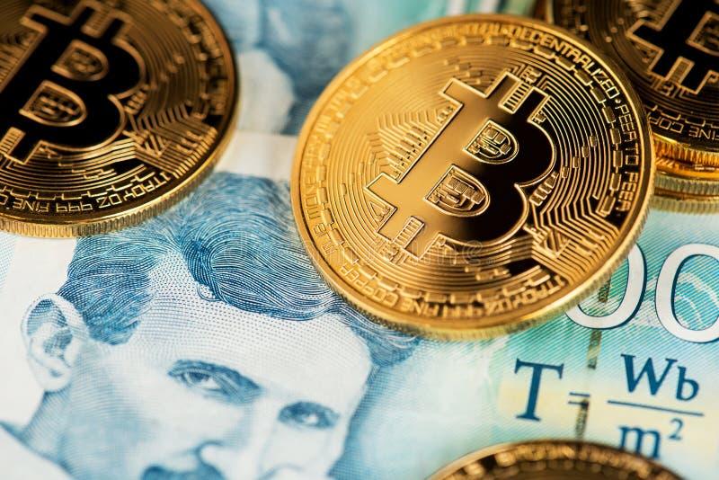 Guld- Bitcoin med serbiska sedlar Stående av forskaren Nikola Tesla royaltyfri foto