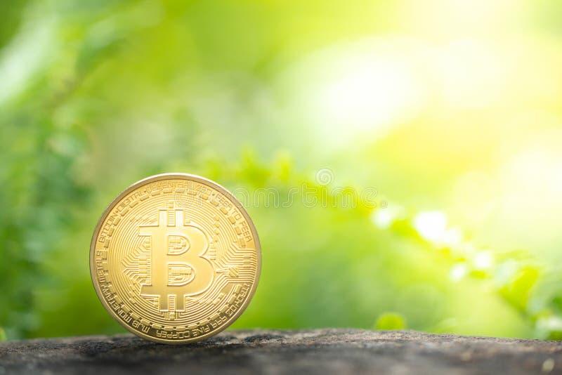 Guld- bitcoin på grönskabakgrund arkivfoto
