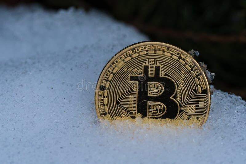 Guld- bitcoinmynt i snö royaltyfria bilder
