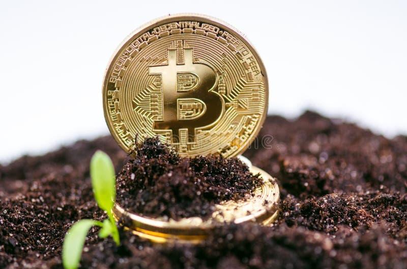 Guld- bitcoinmynt på en jord och en växande växt Faktisk valuta Crypto valuta nya faktiska pengar arkivfoton