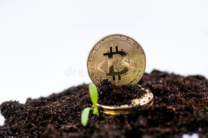 Guld- bitcoinmynt på en jord och en växande växt Faktisk valuta Crypto valuta nya faktiska pengar arkivfoto