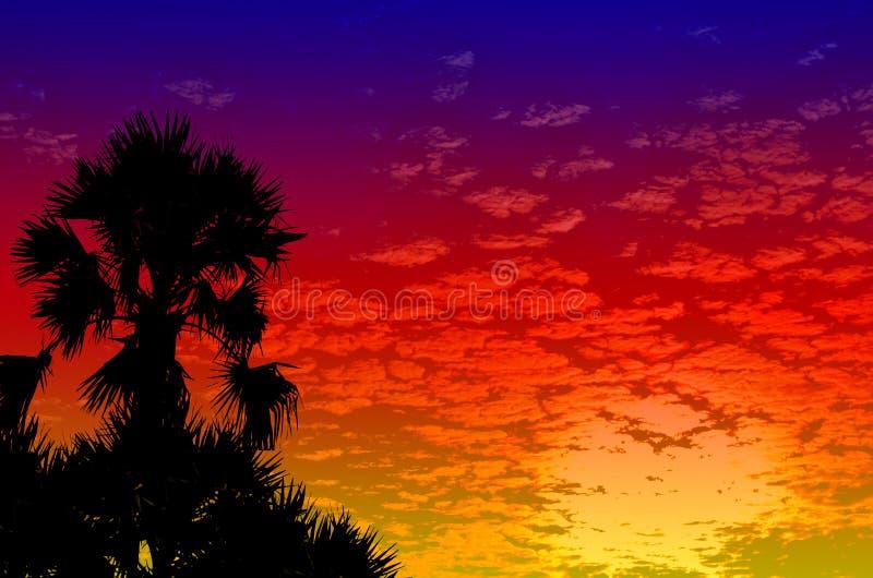 Guld- blå himmel för palmträdsolnedgång arkivbild