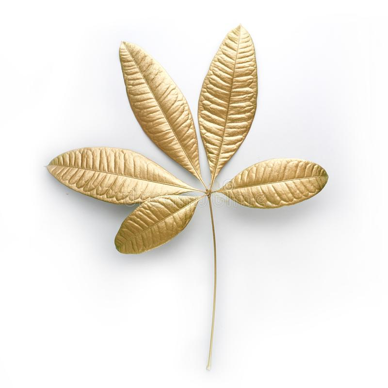 Guld- bladdesignbeståndsdelar Garneringbeståndsdelar för inbjudan, bröllopkort, valentindag, hälsningkort Isolerat på vit royaltyfri bild