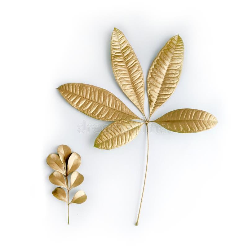 Guld- bladdesignbeståndsdelar Garneringbeståndsdelar för inbjudan, bröllopkort, valentindag, hälsningkort Isolerat på vit royaltyfri fotografi