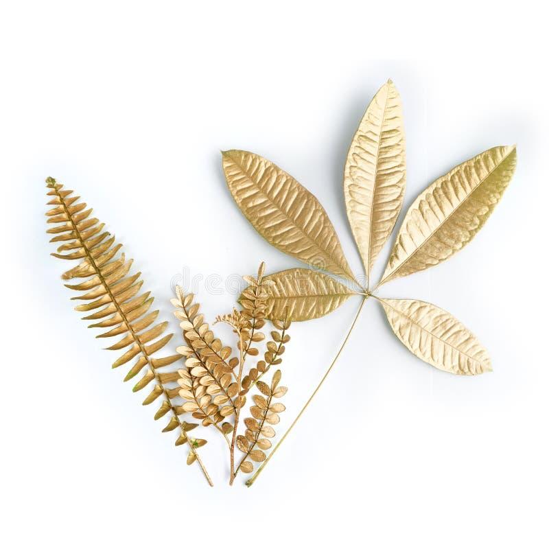 Guld- bladdesignbeståndsdelar Garneringbeståndsdelar för inbjudan, bröllopkort, valentindag, hälsningkort Isolerat på vit arkivfoton