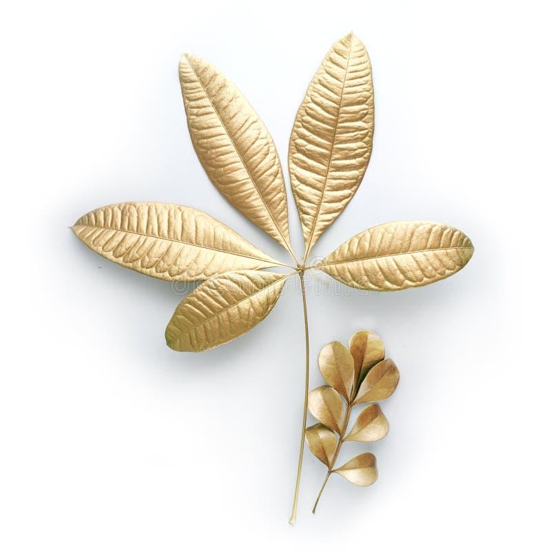 Guld- bladdesignbeståndsdelar Garneringbeståndsdelar för inbjudan, bröllopkort, valentindag, hälsningkort På white royaltyfri foto