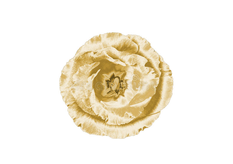 Guld- blomma arkivfoto