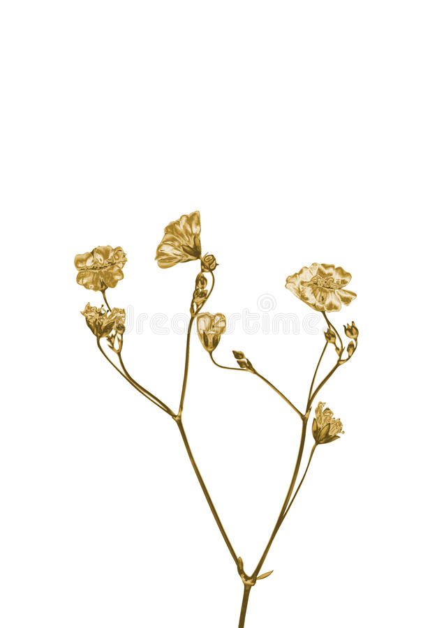 Guld- blomma royaltyfri foto