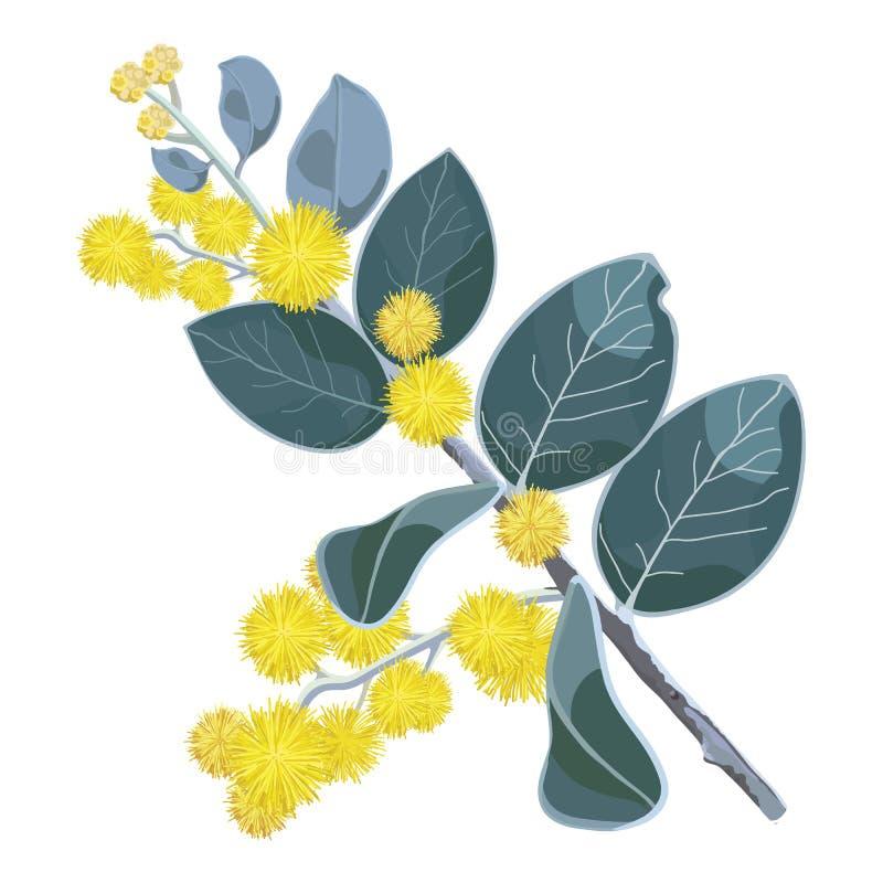 Guld- blommor för blomningWattleträd stock illustrationer