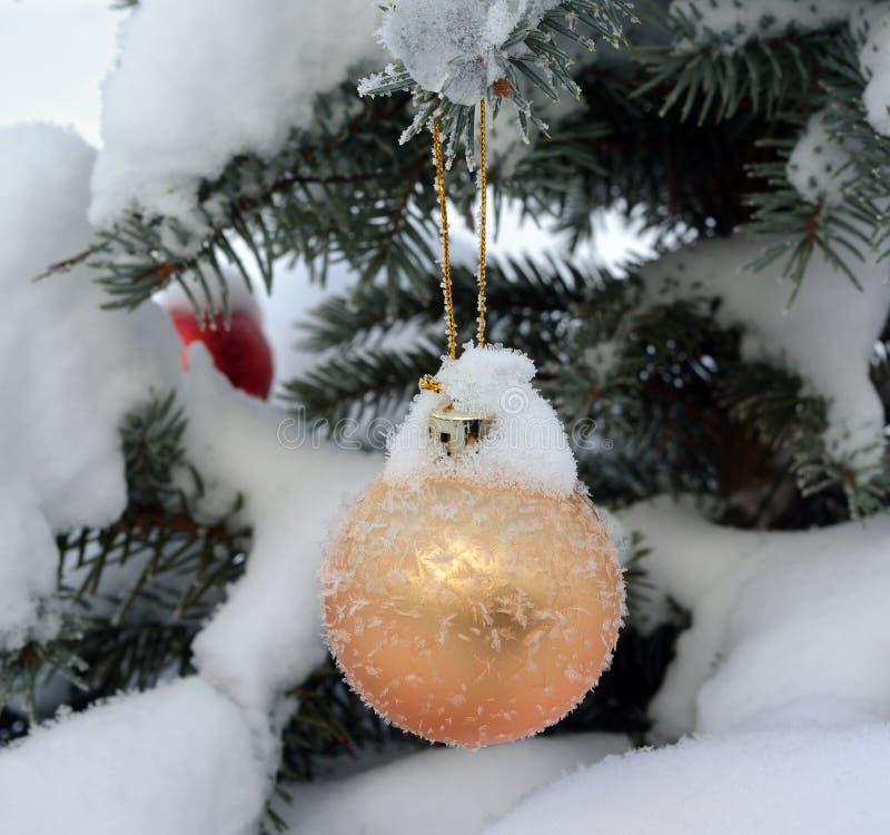 Guld- boll för nytt år på levande gran-träd med frost och snö arkivfoton