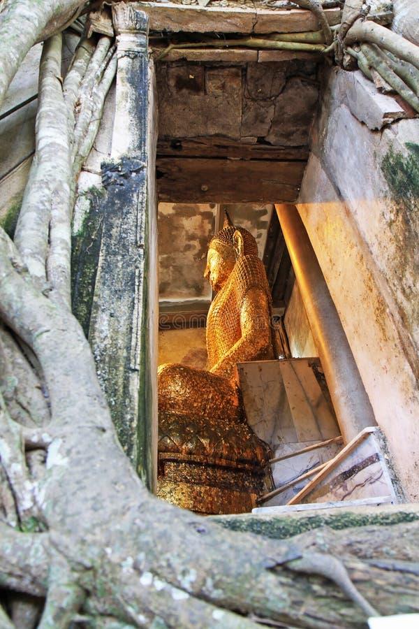 Guld- buddha i naturlig träram royaltyfria foton