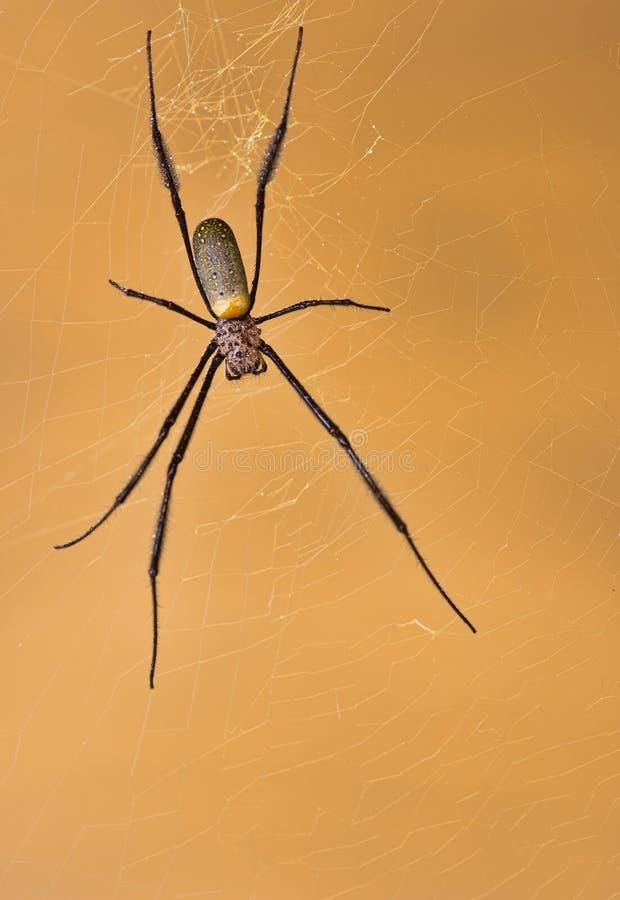 guld- dess sittande spindelrengöringsduk för orb arkivfoto