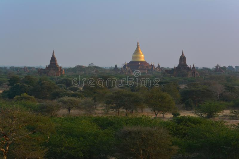 Guld- Dhammayazika pagod på gryning i Bagan Archaeological Zone, Myanmar arkivbilder