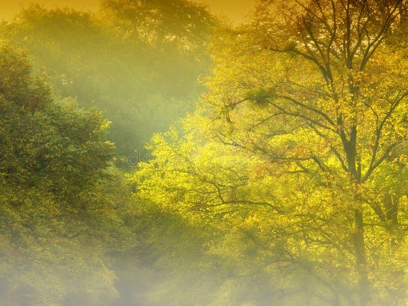 guld- dimmaskog arkivfoto
