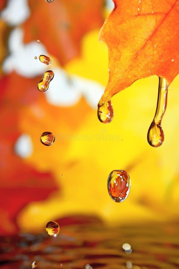 guld- droppfall fotografering för bildbyråer