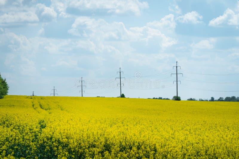Guld- fält av att blomma rapsfröväxten för grön energi och oljeindustri, bränsle, kraftledningar fotografering för bildbyråer