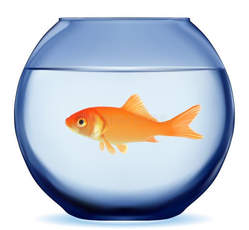 Guld- fisk vektor illustrationer