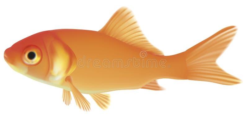 Guld- fisk stock illustrationer