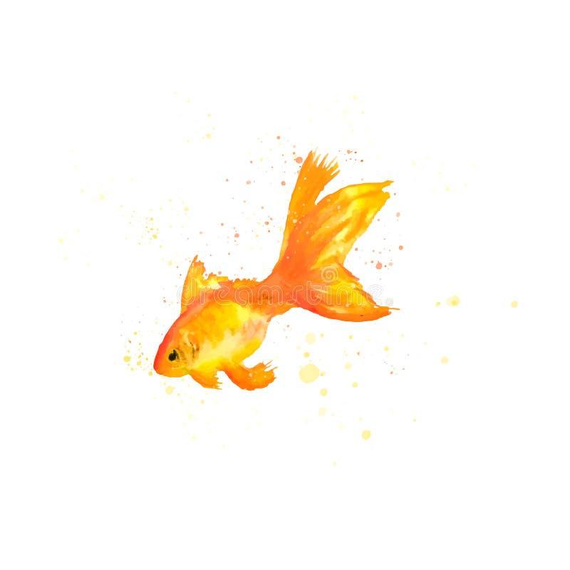 Guld- fisk f?r vattenf?rg ocks? vektor f?r coreldrawillustration f?r fiskgem f?r vattenf?rg guld- arbete f?r konst stock illustrationer