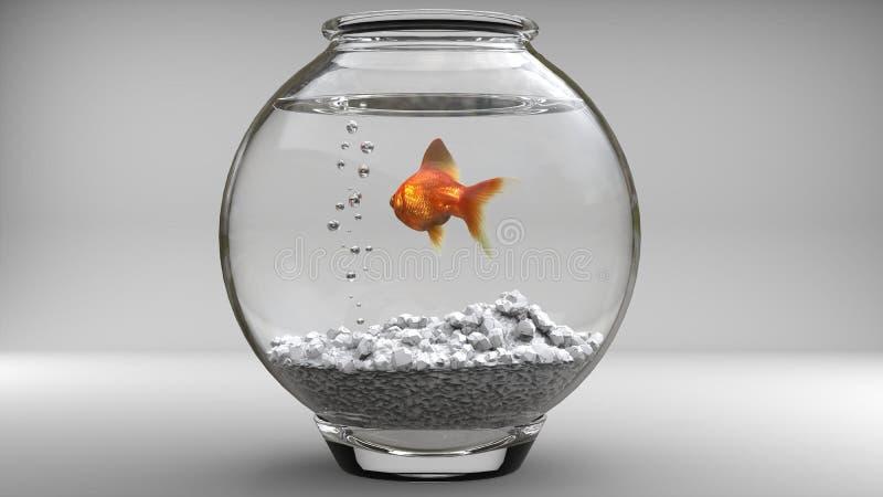 Guld- fisk i en fishbowl - bubblor fotografering för bildbyråer