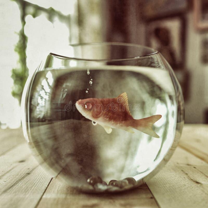 Guld- fisk i en fishbowl stock illustrationer