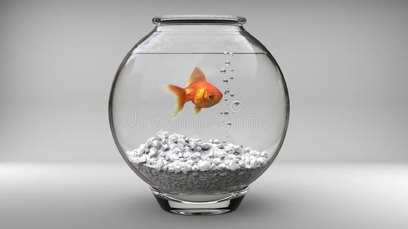 Guld- fisk i en liten fiskbunke royaltyfri fotografi