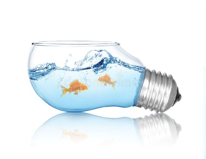 Guld- fisk i vatten inom en elljuskula royaltyfria bilder