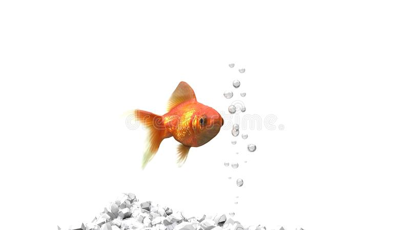 Guld- fisk - vita kiselstenar royaltyfri bild