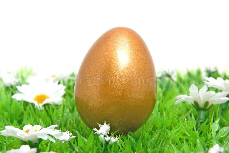 guld- gräs för fegt easter ägg royaltyfria bilder