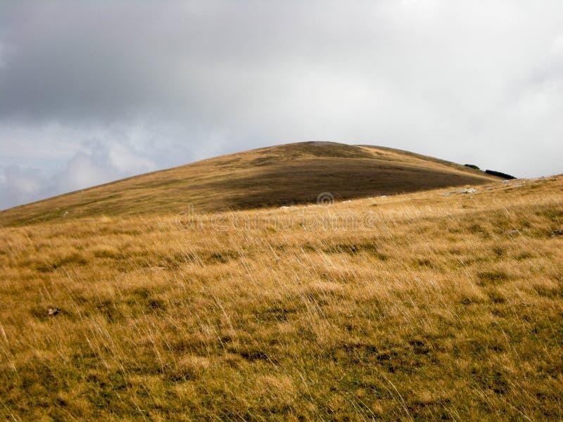 Guld- gräs på bergöverkanten royaltyfri foto