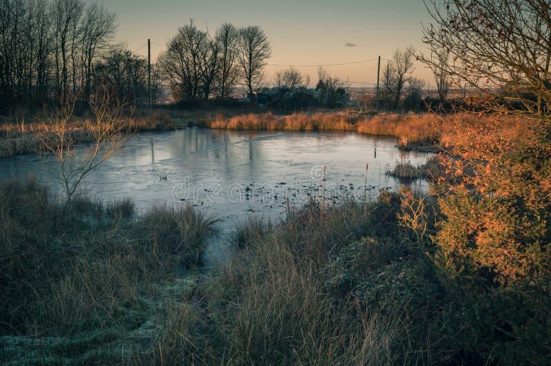 Guld- gryningljus bryter på ett djupfryst damm på den Wetley heden, Staffordshire royaltyfri foto