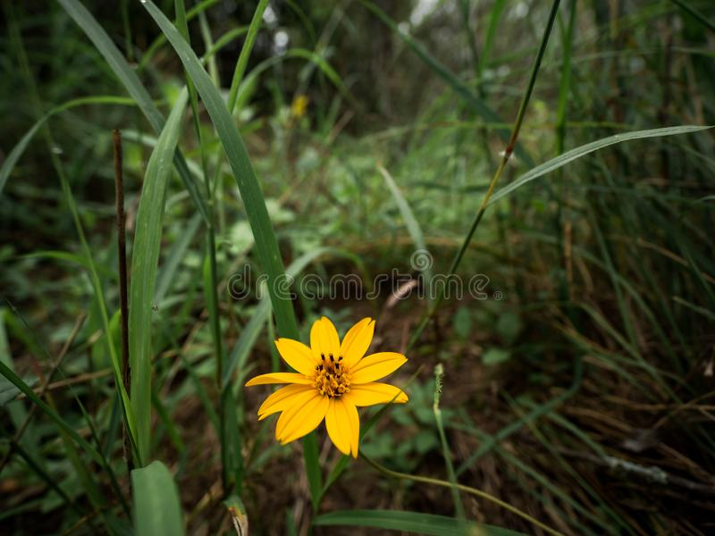 Guld- gul blomma med stigma royaltyfri foto
