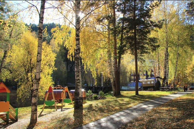 Guld- höst i den Altai regionen i Ryssland Härligt landskap - väg i höstskog royaltyfri fotografi