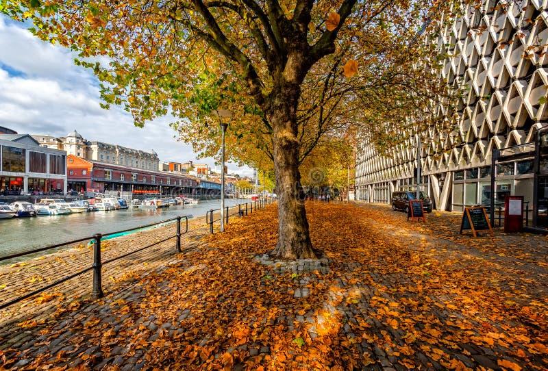 Guld- höstfärger på träd i den Bristol harboursiden arkivbild