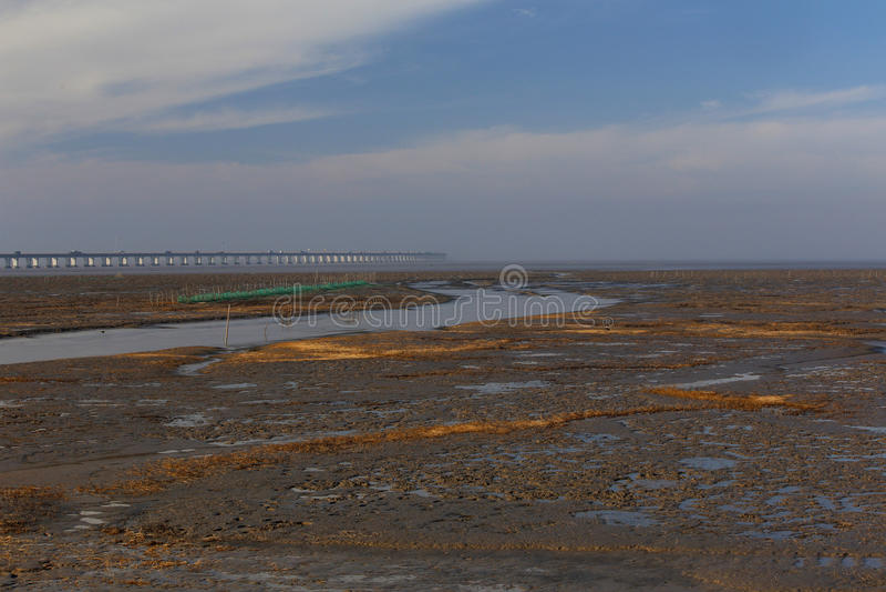 Guld- havsväxt, förtjänar i den tidvattens- lägenheten, den längsta bron i världen fotografering för bildbyråer